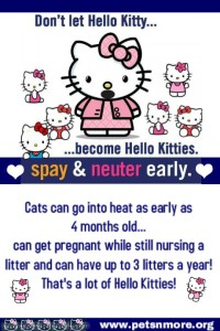 spay, neuter, cats, dogs, kitten, puppy, petsnmore.org, low cost to free spay neuter clinics