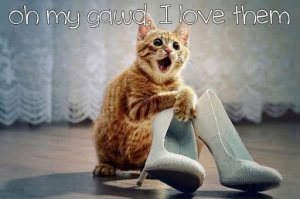 funny pet photos & sayings, dog, cat, funny sayings, funny photos, funny pets, www.petsnmore.org
