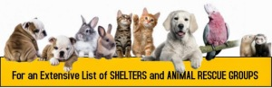 list of animal shelters and rescue groups, dogs cats bunnies ferrets, birds, www.petsnmore.org