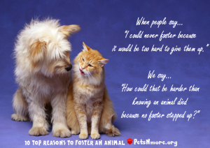 animal, dog, cat, pet, animal, inspiring quotes for animal lovers, petsnmore.org, foster,