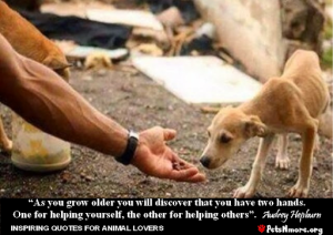 animal, dog, cat, pet, animal, inspiring quotes for animal lovers, petsnmore.org, audrey hepburn