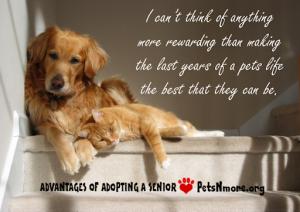 animal, dog, cat, pet, animal, inspiring quotes for animal lovers, petsnmore.org, senior pet,