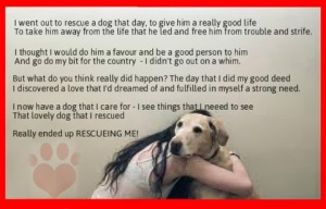 animal, dog, cat, pet, animal, inspiring quotes for animal lovers, petsnmore.org, rescue pet