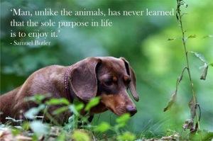animal, dog, cat, pet, animal, inspiring quotes for animal lovers, petsnmore.org, enjoy life