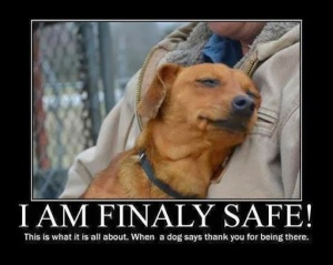 animal, dog, cat, pet, animal, inspiring quotes for animal lovers, petsnmore.org, rescued,