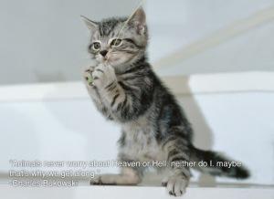 animal, dog, cat, pet, animal, inspiring quotes for animal lovers, petsnmore.org, kitten,