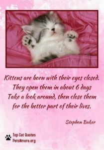 animal, dog, cat, pet, animal, inspiring quotes for animal lovers, petsnmore.org, kittens