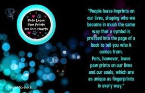 animal, dog, cat, pet, animal, inspiring quotes for animal lovers, petsnmore.org, souls