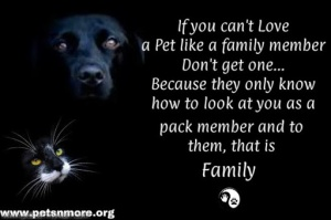 animal, dog, cat, pet, animal, inspiring quotes for animal lovers, petsnmore.org, family member,