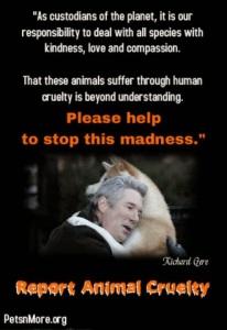 animal, dog, cat, pet, animal, inspiring quotes for animal lovers, petsnmore.org, richard gere